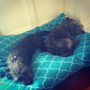 Boo + Alfie